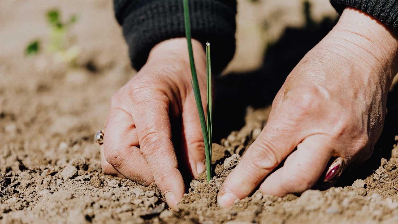 dieBasis - Eure Spende hilft uns wie ein Baum zu wachsen